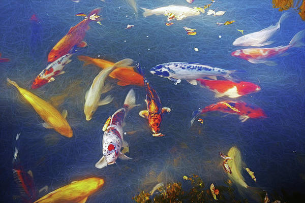 Photograph - Koi Fish by Don Northup