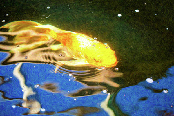 Digital Art - Koi Pond Fish - Golden Dreaming - By Omaste Witkowski by Omaste Witkowski