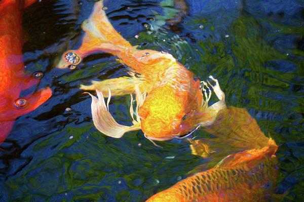 Digital Art - Koi Pond Fish - Golden Surprises - By Omaste Witkowski by Omaste Witkowski