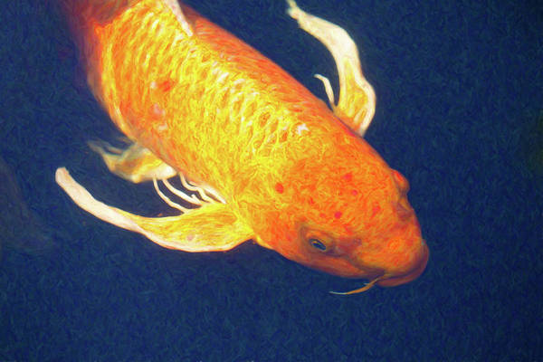 Digital Art - Koi Pond Fish - Liquid Delight - By Omaste Witkowski by Omaste Witkowski
