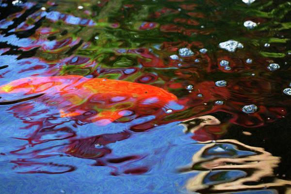 Digital Art - Koi Pond Fish - Random Pleasures - By Omaste Witkowski by Omaste Witkowski