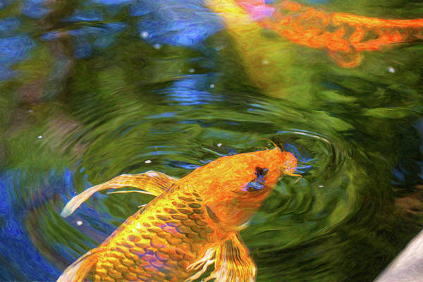 Digital Art - Koi Pond Fish - Turn Me Right Round - By Omaste Witkowski by Omaste Witkowski