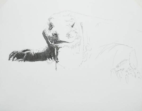 Drawing - Komodo Dragon 2 by Barbara Keith