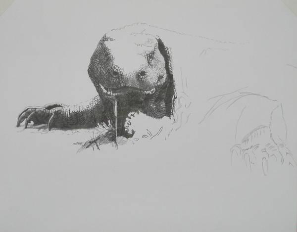 Drawing - Komodo Dragon 4 by Barbara Keith