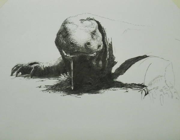 Drawing - Komodo Dragon 6 by Barbara Keith