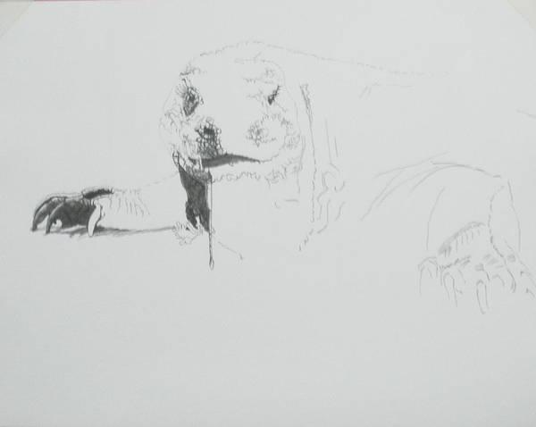 Drawing - Komodo Dragon by Barbara Keith