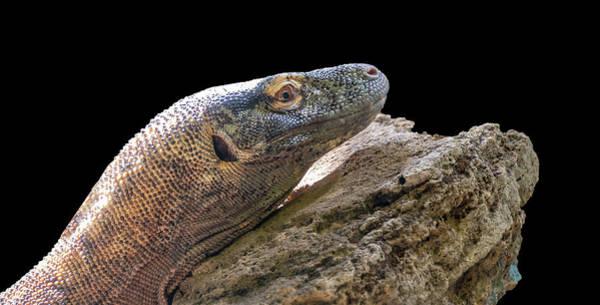 Photograph - Komodo Dragon by Philip Rispin