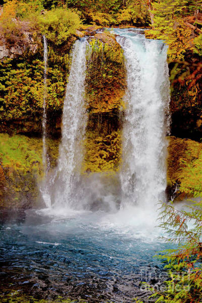 Photograph - Koosah Falls Autumn by David Millenheft