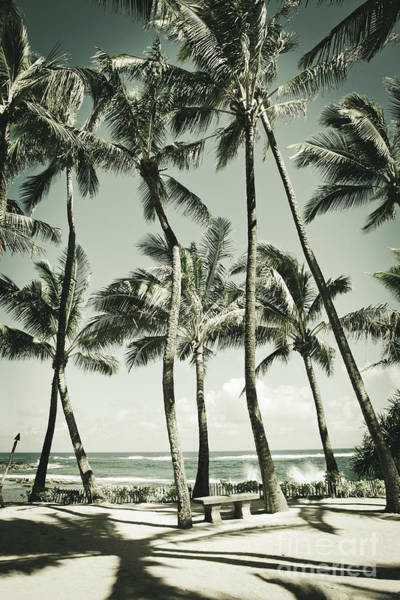 Photograph - Kuau Beach Palms by Sharon Mau