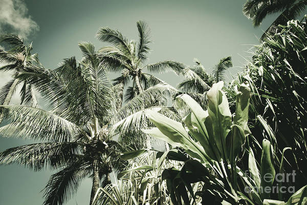 Photograph - Kuau Hawaii Tropical Palms Sea Green Paia Maui by Sharon Mau