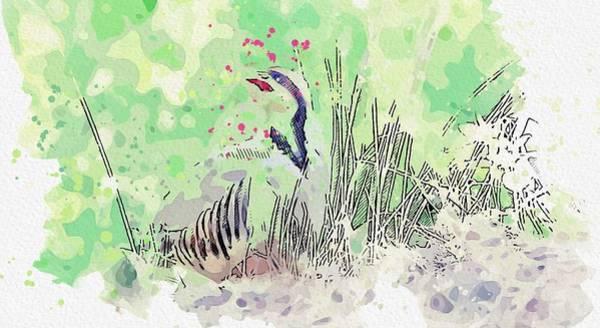 Painting - Kurdish National Bird, Partridge Watercolor By Ahmet Asar by Ahmet Asar