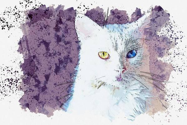 Painting - Kurdish Van Cat   Watercolor By Ahmet Asar by Ahmet Asar
