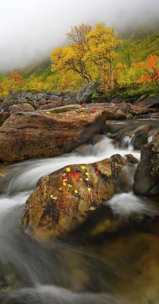 Birch River Photograph - Kvaløya Fall Colours by Antonyspencer