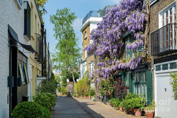 Photograph - Kynance Mews Wisteria by Tim Gainey