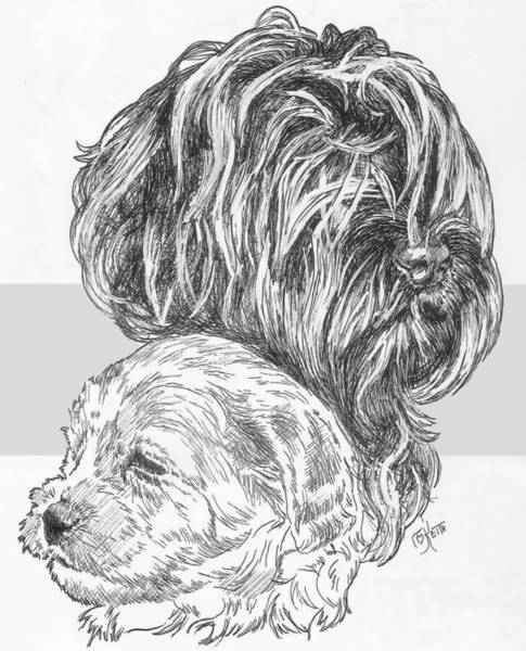 Drawing - Labradoodle And Pup by Barbara Keith