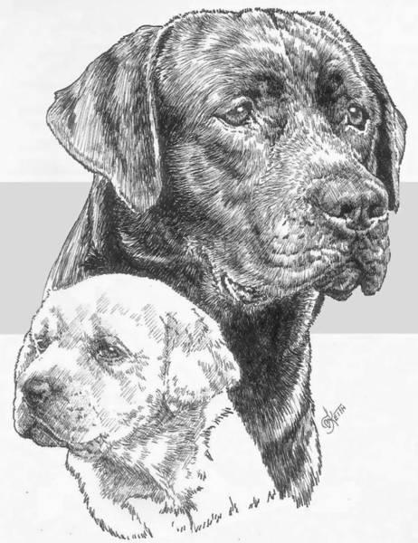 Drawing - Labrador Retriever And Pup by Barbara Keith