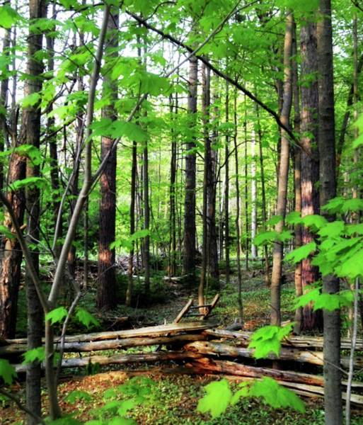 Photograph - Ladder To Nature by Cyryn Fyrcyd