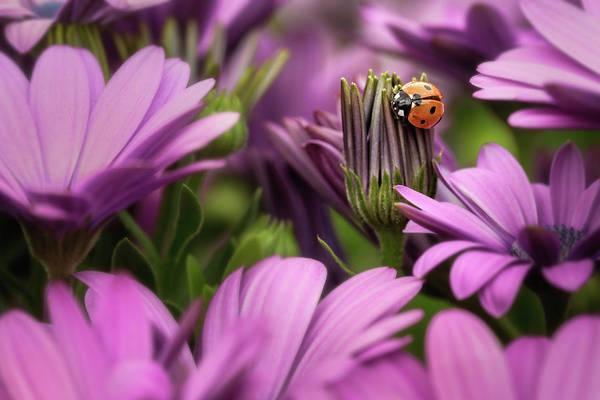 Wall Art - Photograph - Lady B In Purple by Ann Skelton