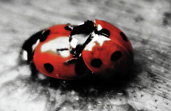 Wall Art - Photograph - Lady Bug Loving by Martin Newman