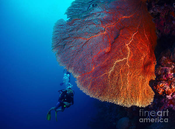 Wall Art - Photograph - Lady Diver Exploring Tropical Bright by Dudarev Mikhail