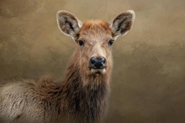 Photograph - Lady Elk by Kelley Parker