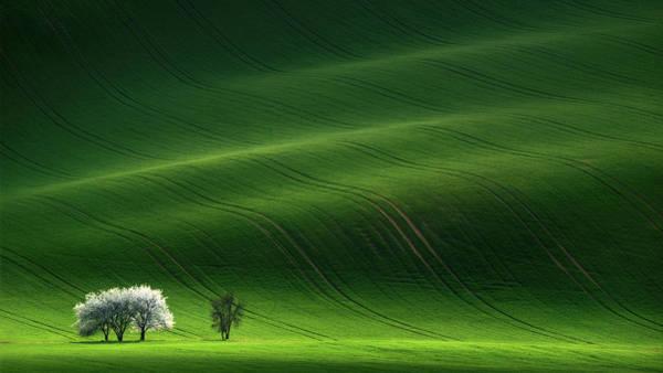Photograph - Lady In White by Vlad Sokolovsky