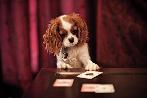 Luck Photograph - Lady Luck by R. Brandon Harris
