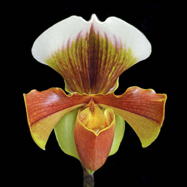 Wall Art - Photograph - Lady Slipper by Terence Davis