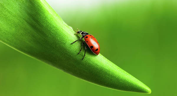 Environmental Issues Photograph - Ladybug by Luvo