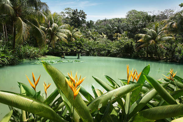Jamaica Photograph - Lagoon At Cranbrook Flower Forest by Narvikk