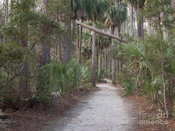 Photograph - Lagoon Trail by Patrick M Lynch