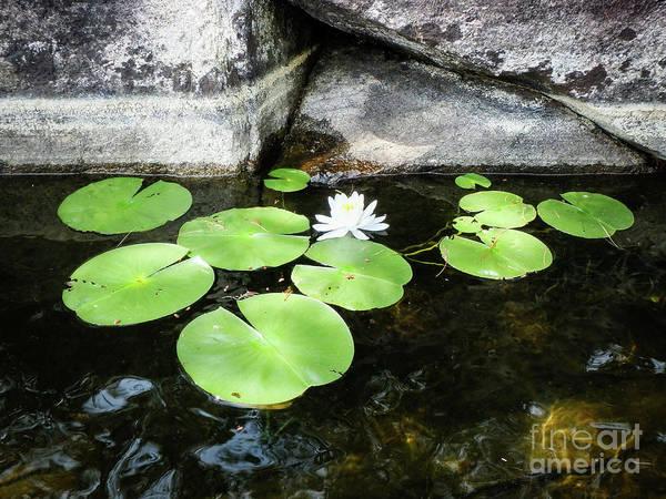 Photograph - Lake Bloomer by Lori Dobbs