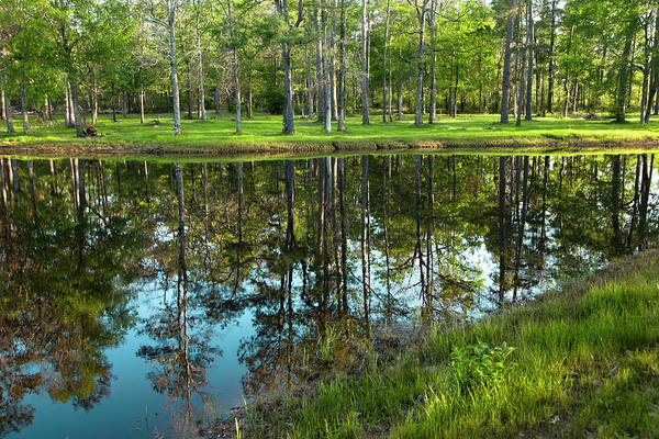 Hardwood Photograph - Lake In Texas Surrounded By Trees by Fstop123