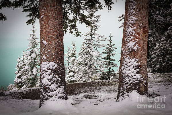Wall Art - Photograph - Lake Louise Trees by Inge Johnsson