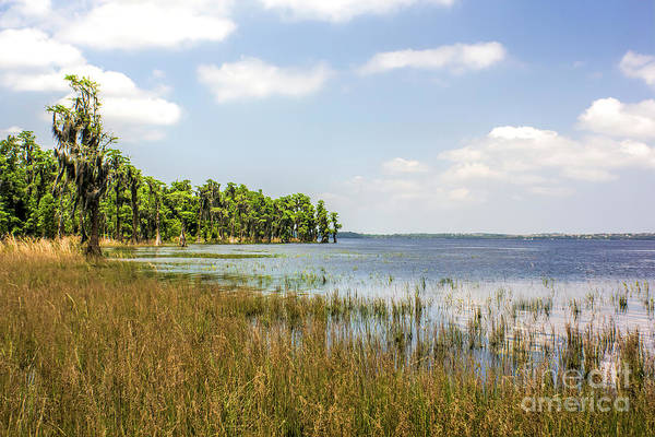 Wall Art - Photograph - Lake Luisa, Florida by Felix Lai
