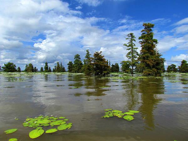 Bald Cypress Digital Art - Lake Marion, South Carolina by Matt Richardson