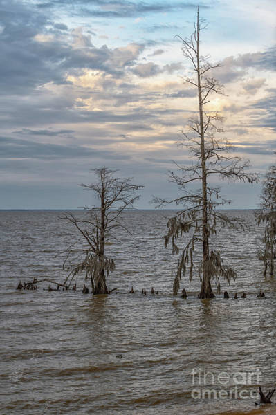 Photograph - Lake Moultrie In The Winter by Dale Powell