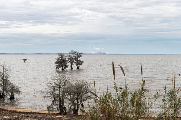 Photograph - Lake Moultrie Lake Side by Dale Powell