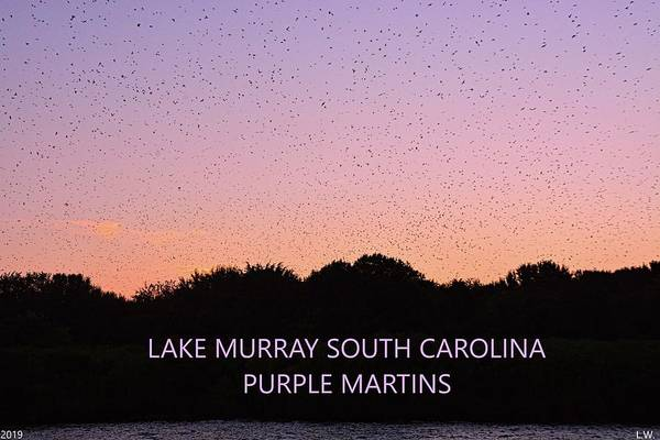 Wall Art - Photograph - Lake Murray South Carolina Purple Martins by Lisa Wooten