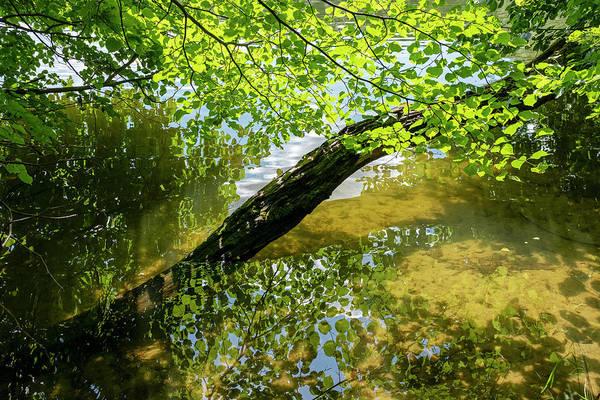 Photograph - Lake Near Sweita Lipka, Northern Poland by Dubi Roman