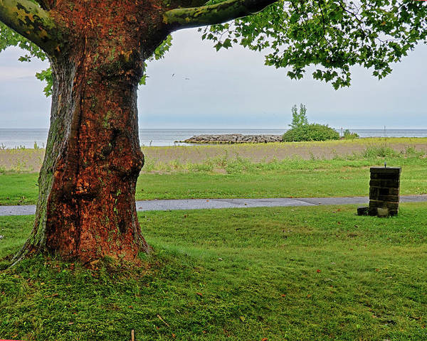 Photograph - Lake Ontario Hamlin State Beach Tree Hamlin Ny by Toby McGuire