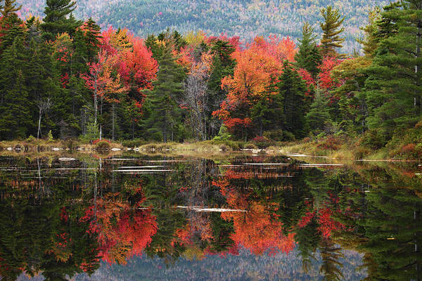 New Hampshire Photograph - Lake Perfectly Reflects Powerful Fall by Ilia Shalamaev Wwwfocuswildlifecom