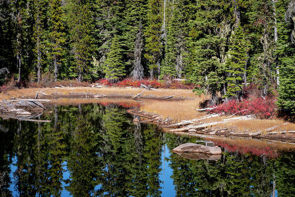 Photograph - Lake Reflections by Steven Clark