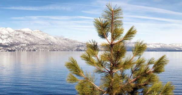 Wall Art - Photograph - Lake Tahoe Pine Tree by Christopher Johnson