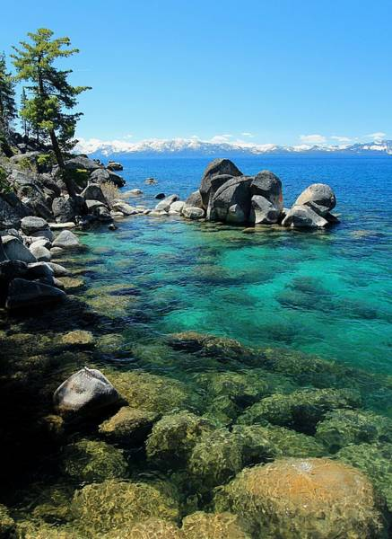 Photograph - Lake Tahoe Spring Portrait by Sean Sarsfield