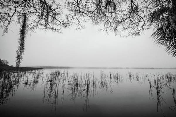 Photograph - Lake Tarpon by Joe Leone