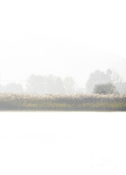 Wall Art - Photograph - Lakeside Fog by DiFigiano Photography