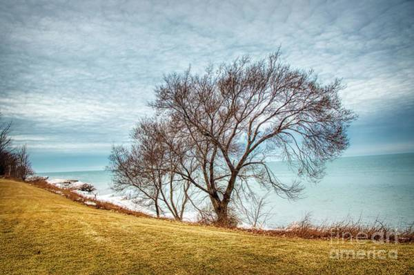 Photograph - Lakeshore Lonely Tree by Jim Lepard