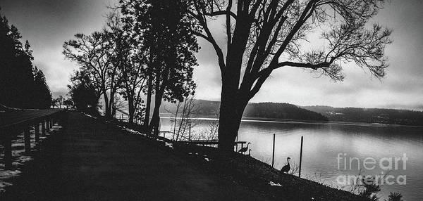 Photograph - Lakeside Silhouette by Matthew Nelson