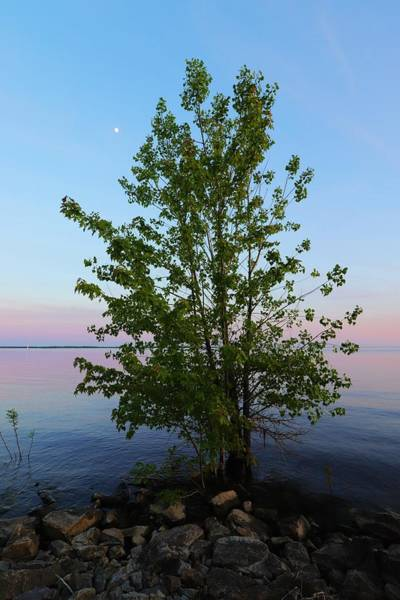 Wall Art - Photograph - Lakeside Sunset Tree Moon Rising by Marlin and Laura Hum